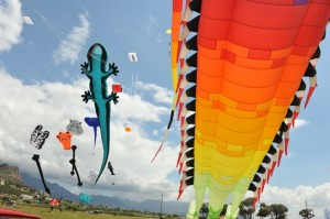Giant Kites (Eric Miller)