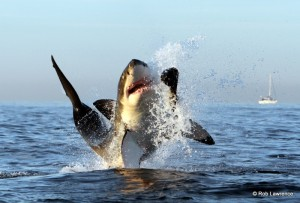 Photo: African Shark Eco-Charters
