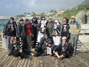 Waddlers Stand together at Boulders Beach, Simon's Town