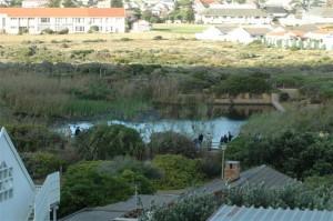 Clovelly Wetlands