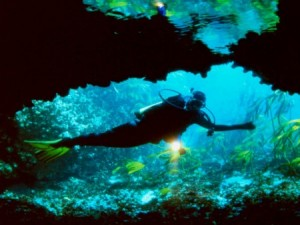 Image: Pisces Divers