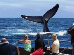Whale Watching Boat Trip