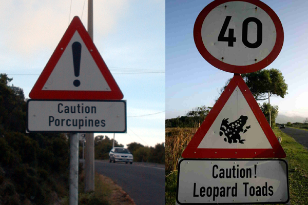 Porcupines and Toads