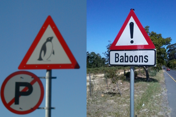 Penguins and Baboons