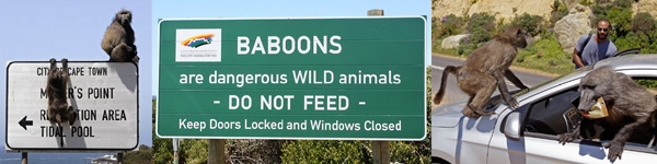 Baboon warning signs