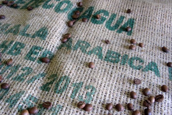 Arabica Beans - Masi Cafe