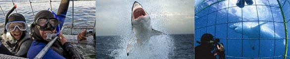 07 shark diving