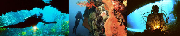 08 Diving