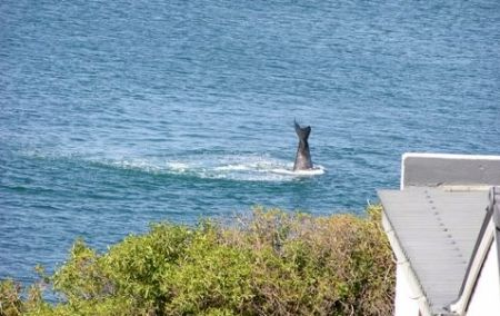 You could stay here and watch whales! Photo: Mike from the Winston