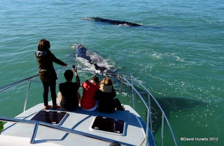 Whale Watching Boat Trip. Photo D Hurwitz August 2012