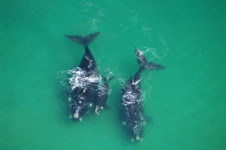 Aerial View of Whales. Photo: South African Tourism