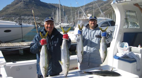 Yellowtail Catch