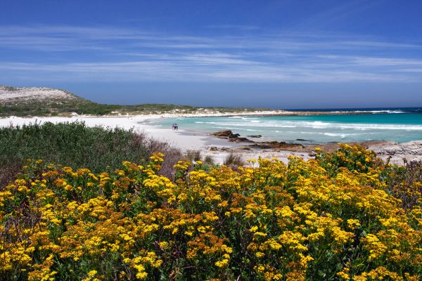 Wildflowers and water: Scarborough. Photo: Brett Cole