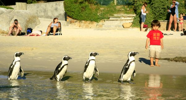 Boulders Beach (photo-Jeremy Jowell)