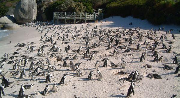 Foxy Beach