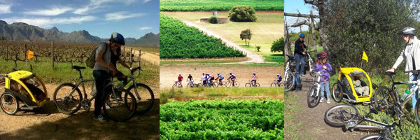 Winelands Bikes n Wines Day tour