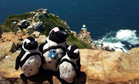 3 Pikkewyne at Cape Point Lighthouse Photo Peter Haarhof