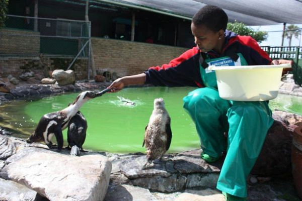 SANCCOB saves Seabirds