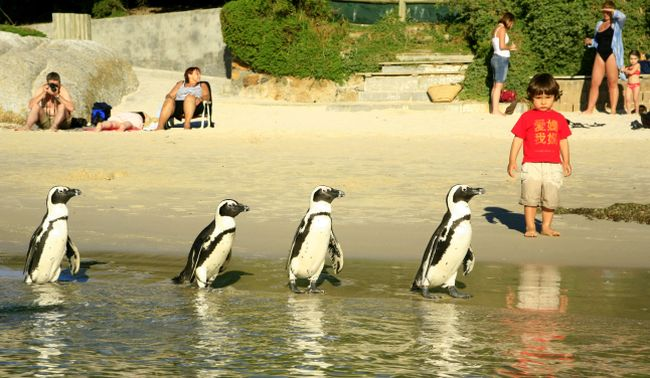 Kids at Boulders Beach. Photo _ Jeremy Jowell