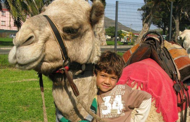 Kids Camel Rides. Photo. Cape Camel Rides