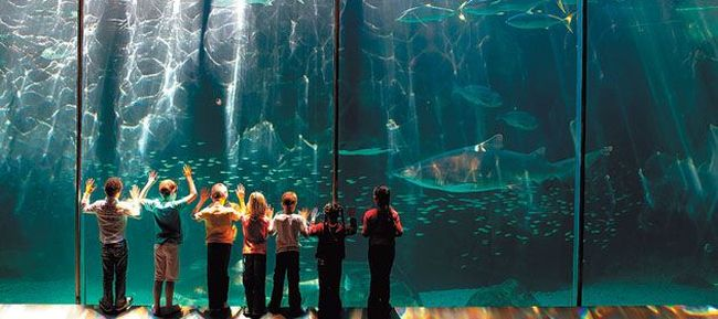 Two Oceans Aquarium. Photo. google Images