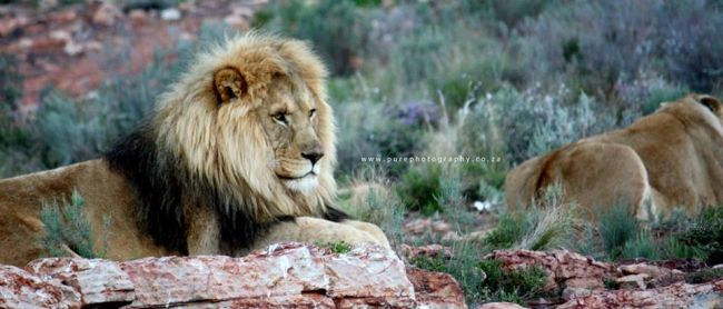 Safari Day Tour from Cape Town