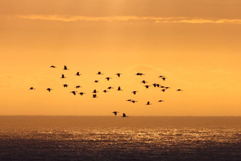 Cape Town Sunset. Photo. Brett Cole