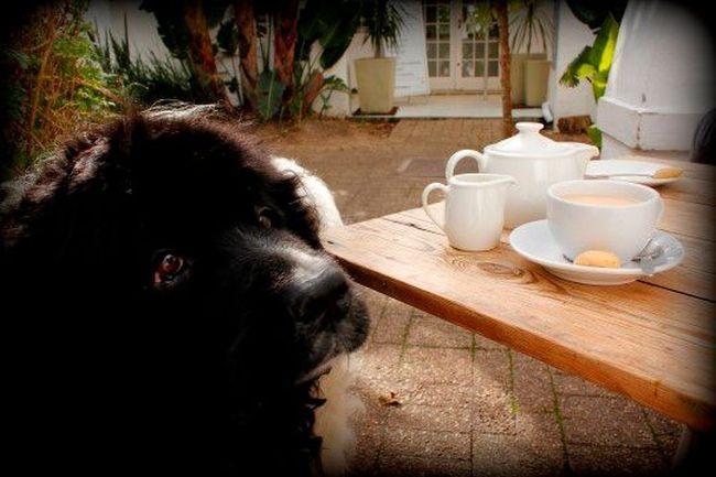 Foodbarn Deli (Photo:gabriellasumbrealla.com)