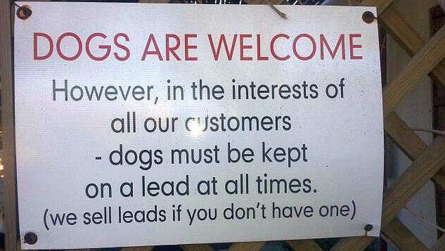 04 Cape Town Dog Friendly Restaurants