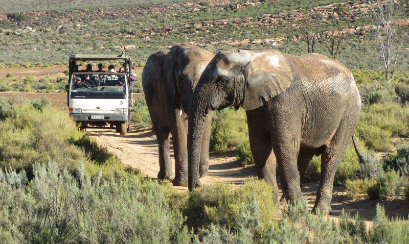 Sensational Safari Year End Function