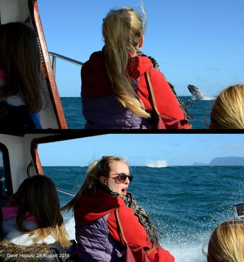 Boat Based Whale Watching Photo: Simon's Town Boat Company