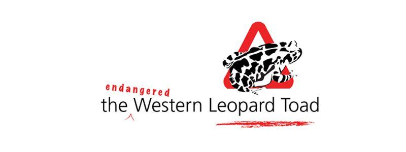 Endangered Western Leopard Toad