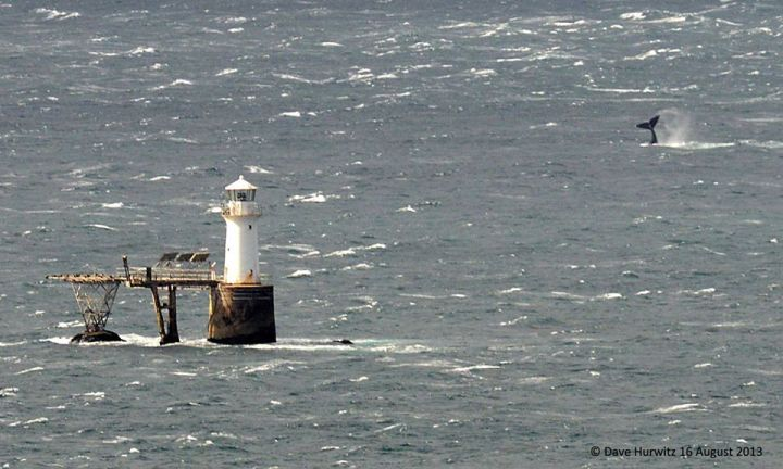 Land based Whale Watching Simon's Town. Photo: D. Hurwitz