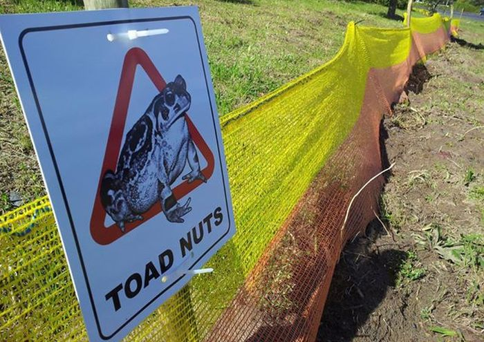 Toad Barriers