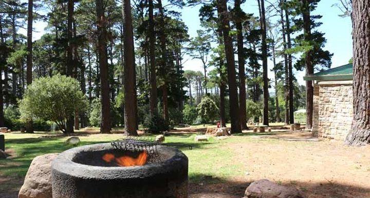 Newlands Forest Photo: picnicandbraai.co.za