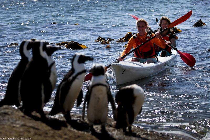 Paddling to the Penguins. Photo. Jacques Marais