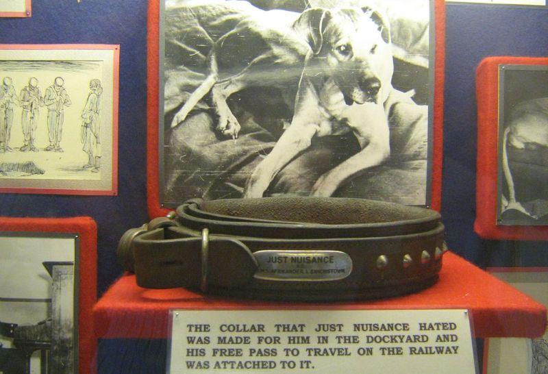 Simon's Town Museum - Just Nuisance Collar