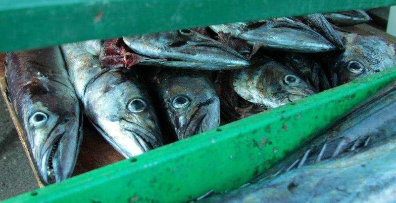 Kalk Bay Fish Market Photo © AngelaAshmann