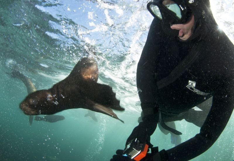 Snorkeling with Seals Photo © Steve Benjamin