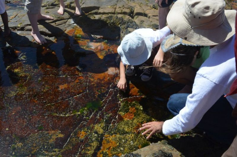 Rock Pool at Dalebrook Beach Photo © Save our Seas
