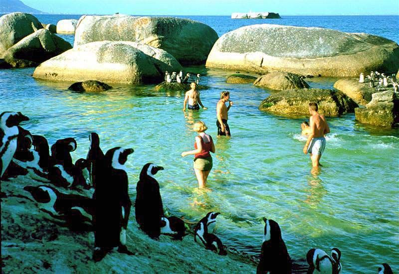 Swim with penguins Photo © Rontravel