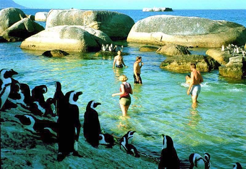 Swim with penguins Photo © Rontravel