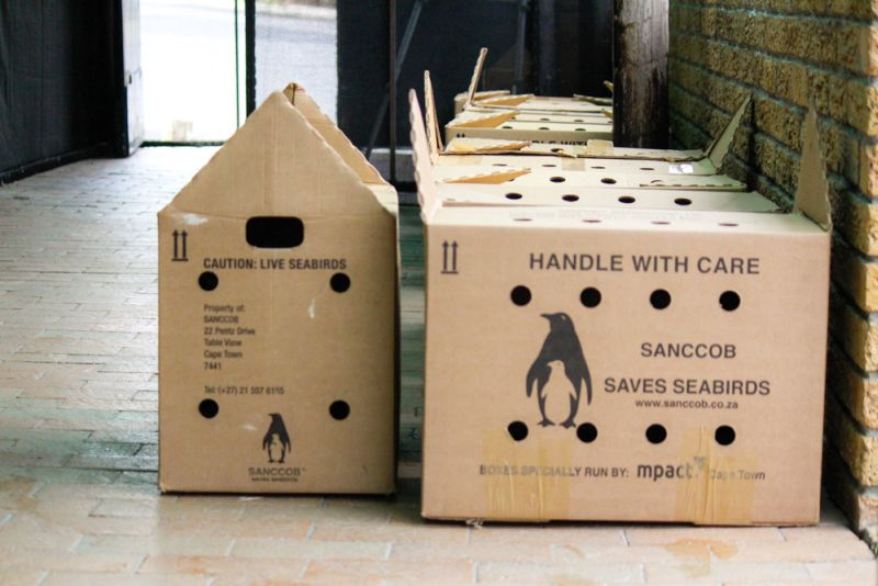 Moving penguins and other Seabirds  in boxes