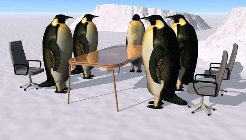 Cape Point Route loves penguins