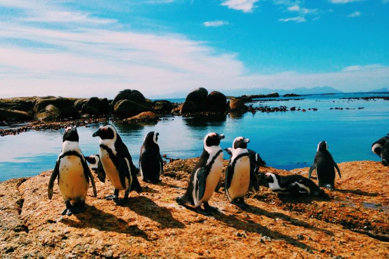 Conference with Penguins