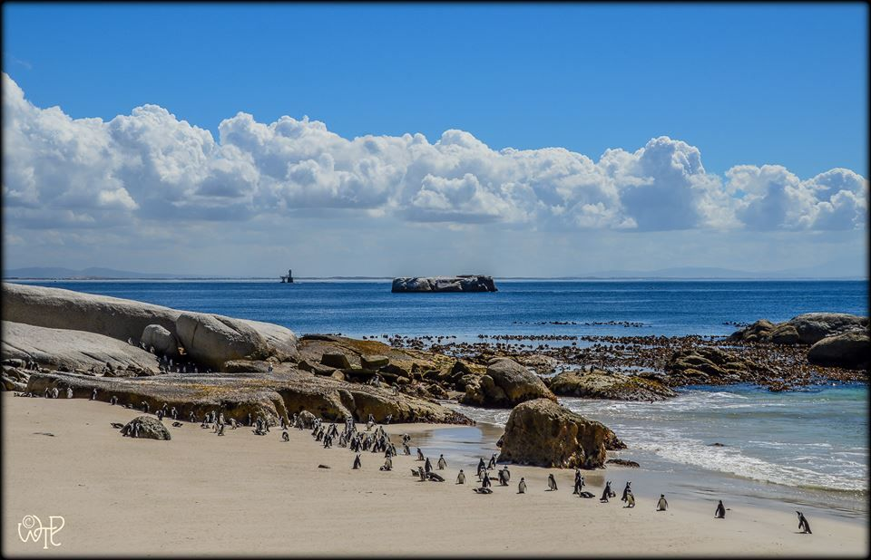 Boulders Beach, Table Mountain National Park. Photo: What's the Point