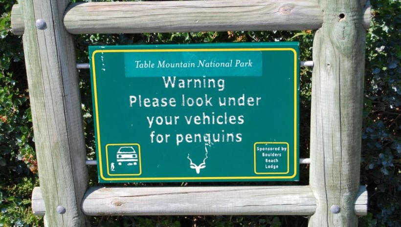 Look under your car for penguins