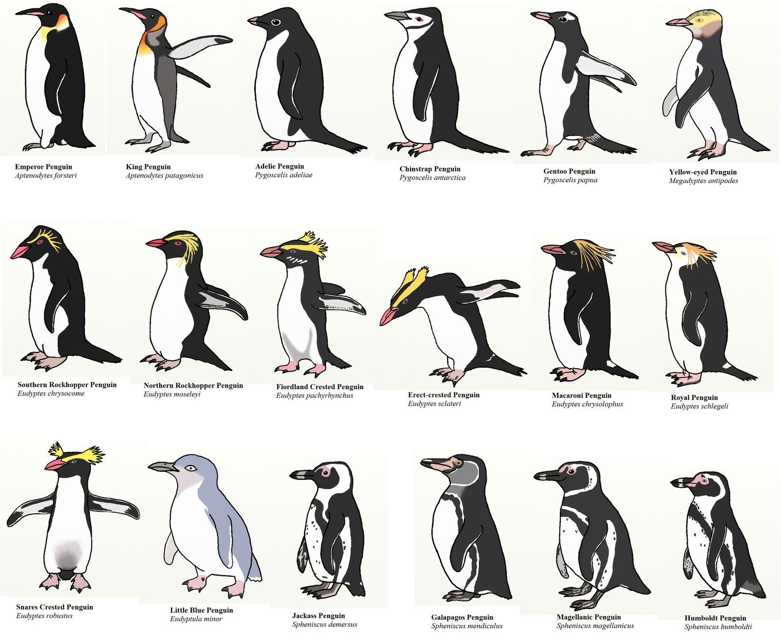 Penguins of the World: Google Images
