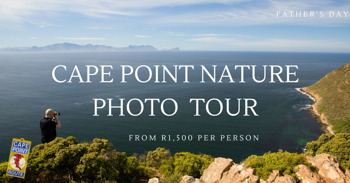 Cape Point Nature Photo Tour