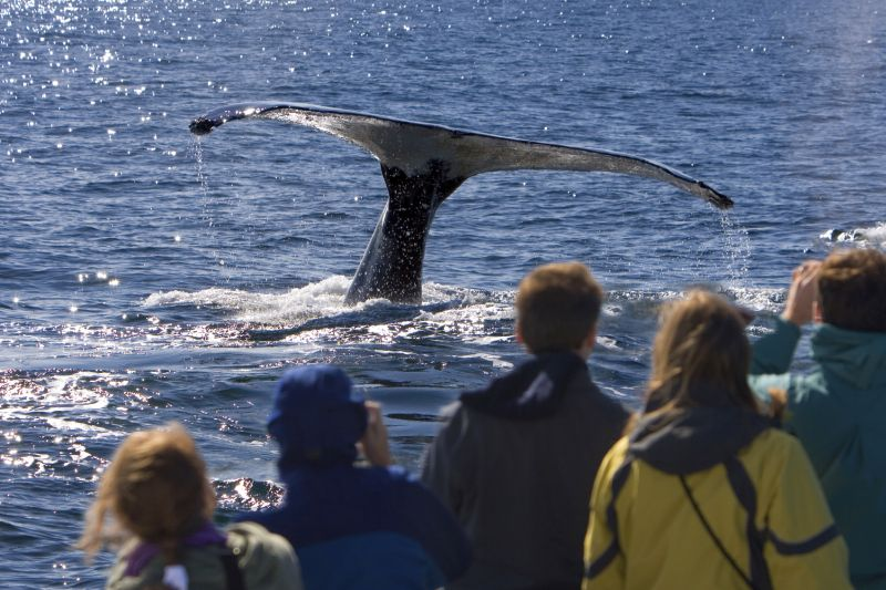 Boat Based Whale Watching. Photo: Calders Hotel